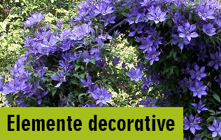 elemente-decorative
